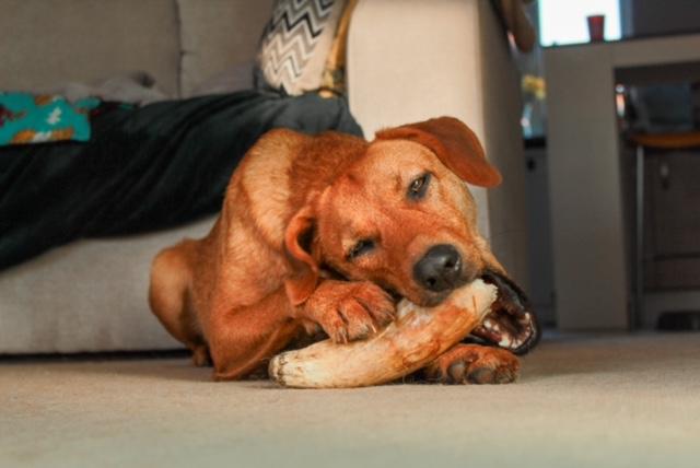 Bonsai, dog breeds treats