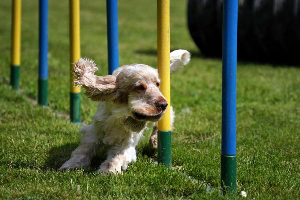 Dog Fitness Equipment poles