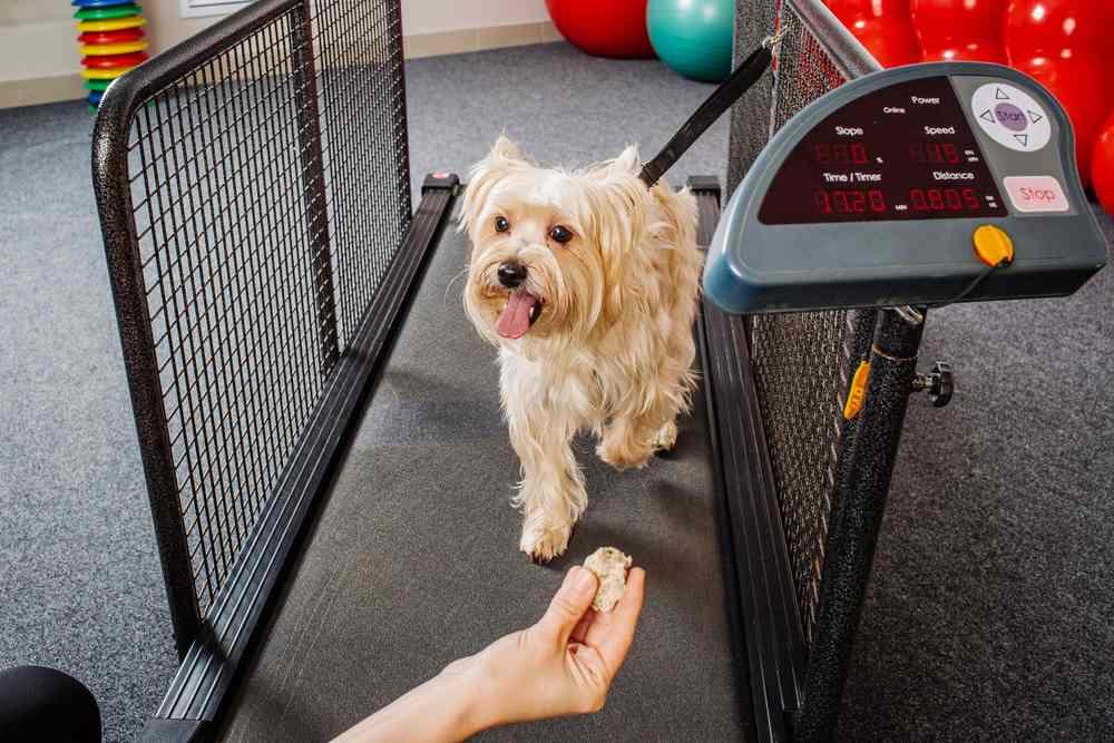 Dog Fitness Equipment Treadmill