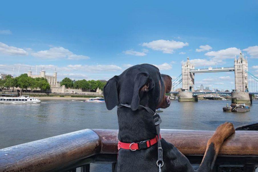british pooches travel tower bridge