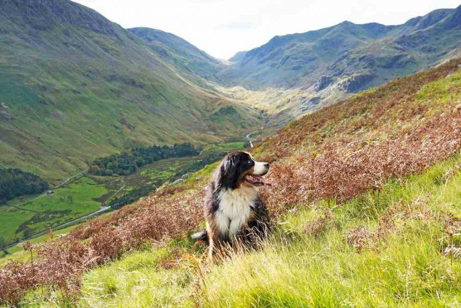 Lake District dog friendly spots staycations UK