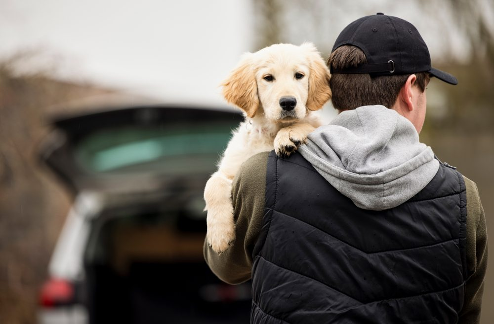 keeping your dog safe from thieves
