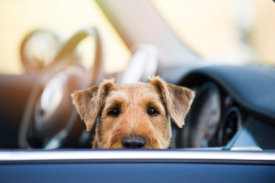 pet safe in the car