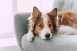 dog adapting to busier lifestyle