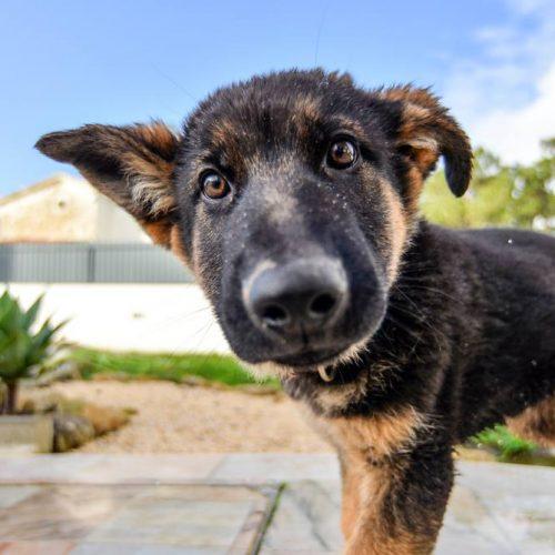 dog behaviours training