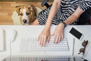 allows dogs in the workplace