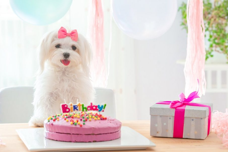 pampered dogs gifts