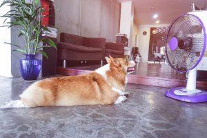 dog cool in heatwave