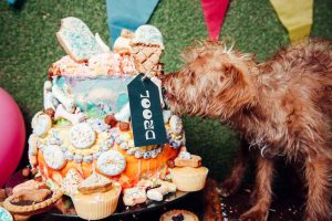 Drool food hall for dogs