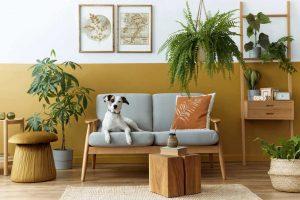 pet safe houseplants dog on chair