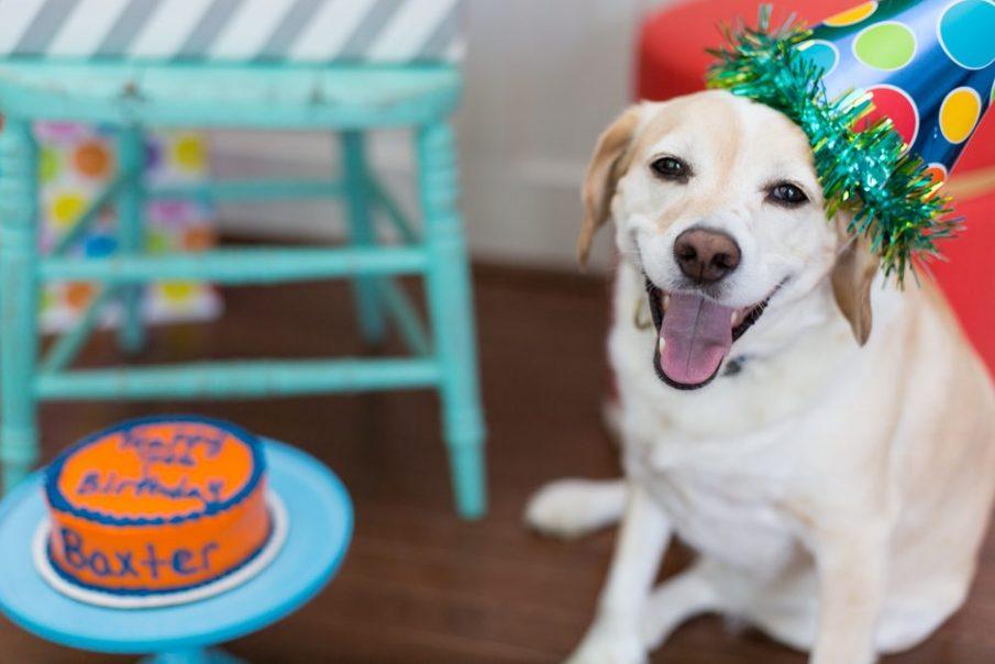 happy dog birthday